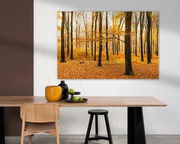 Het oranje bos van Albert Lamme