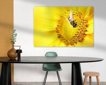 Biene von Michelle Zwakhalen