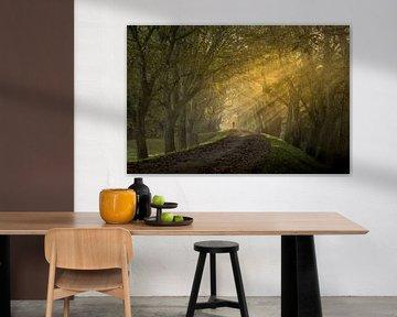 Magische zonnestralen in de herfst op Notendijk bij Heerlijkheid Mariënwaerdt