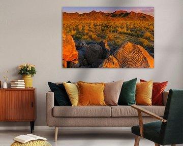 Signal Hill, Saguaro Nationaal Park, Arizona van Henk Meijer Photography