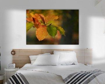 Herfstbladeren van Truus Nijland