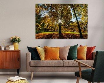 Châtaignier plein aux couleurs de l'automne
