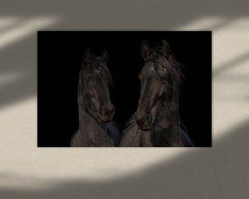 Fries paard, kleur en zwart/wit. Friesian. van Gert Hilbink