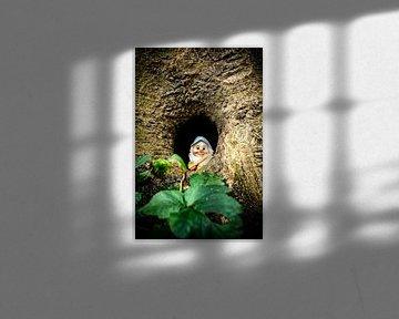 Gnome_01 von Johan Honders