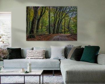 Het Speulderbos van Natascha Worseling