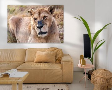 Leeuwin in Kruger National Park, Zuid-Afrika van Easycopters