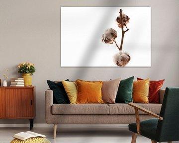 Baumwolle von Mandy Jonen