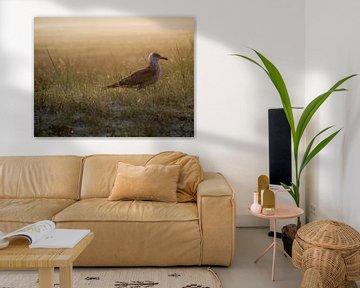 Een meeuw in de duinen van Martijn Wit