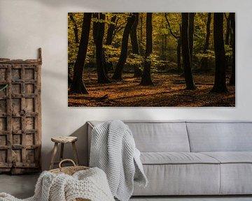 Frieden finden in einem unruhigen Wald von Michel Knikker