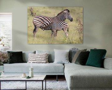 Afrikaanse Zebra's van Dennis Eckert