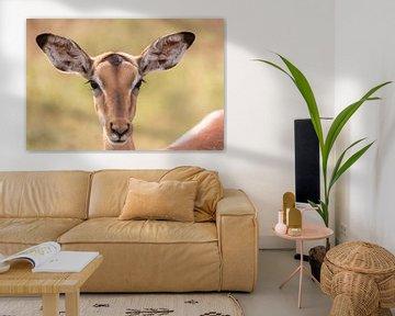 Impala Antilope von Dennis Eckert
