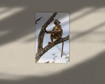 wilde aap van Dennis Eckert