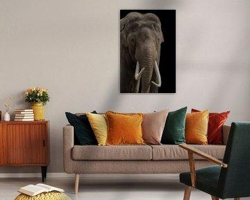 Afrikanischer Elefant, mit Stoßzähnen von Gert Hilbink