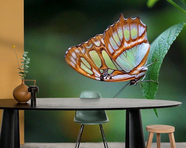 Sfeerimpressie behang: Malachietvlinder van Ineke Klaassen