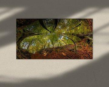 Buigende Bomen in Herfstsfeer van Marcel van Kan
