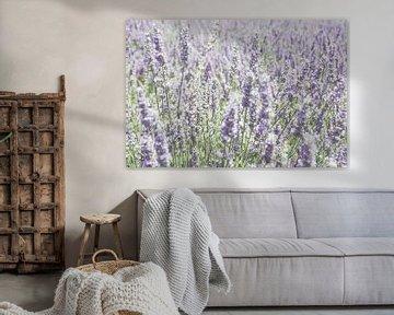 Lavendelweichheit von Ellinor Creation