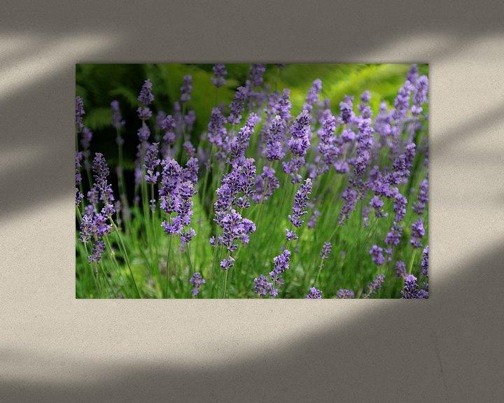 Beispiel: Lavendelduft von Ostsee Bilder