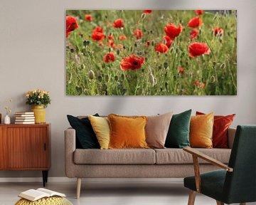 Poppys von Ostsee Bilder