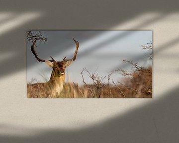 Damhert van Photography by Cynthia Frankvoort