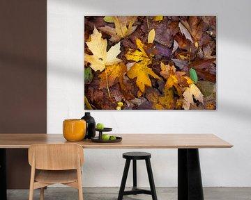 Herfst boeket van herstkleur bladeren van MPhotographer