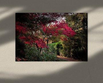 Herfst van Carla van Zomeren