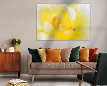 gelbe Tulpe von Drie Bloemen Gallery