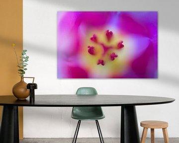 rosa Tulpe von Drie Bloemen Gallery
