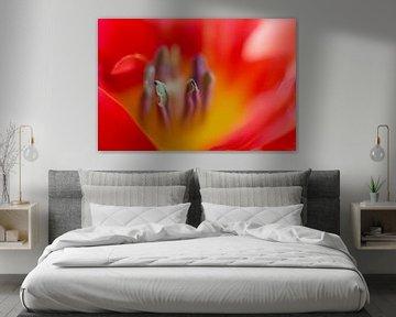 rote Tulpe von Drie Bloemen Gallery