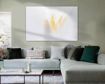 weiße Tulpe von Drie Bloemen Gallery