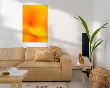 Orangenblüte von Drie Bloemen Gallery