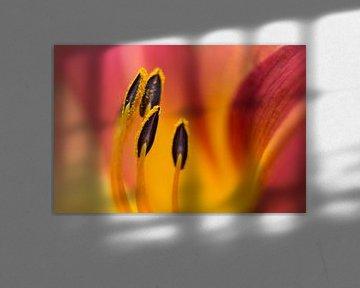 Lilie von Drie Bloemen Gallery