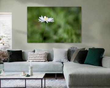 daisy van Drie Bloemen Gallery