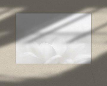white petals van Drie Bloemen Gallery