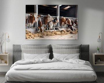 Roodbonte koeien in buitenstal op de boerderij van Yvonne van Driel