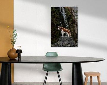 Sibirischer Husky an einem Wasserfall von Moo pix
