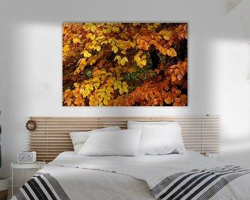 Glänzendes Herbstwetter von Arie Visser