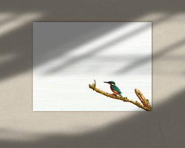 Eisvogel auf Ast mit weißen Hintergrund (Wasser) von Christian Mueller