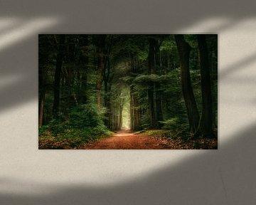 Dans les bois sur Georgios Kossieris