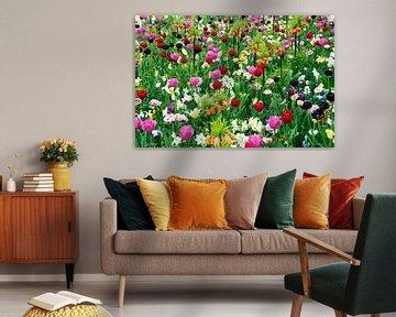 tulpen en andere bloemen in het veld von Compuinfoto .