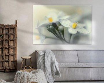 Fading flowers... (bloem, lente, geel) von Bob Daalder