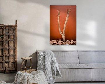 Wüstenpflanze vor einer Wand in Terrakottafarbe von Jille Zuidema