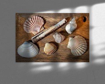 stilleven met verschillende schelpen van Hanneke Luit