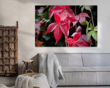 Rote Blätter von Anita van Hengel