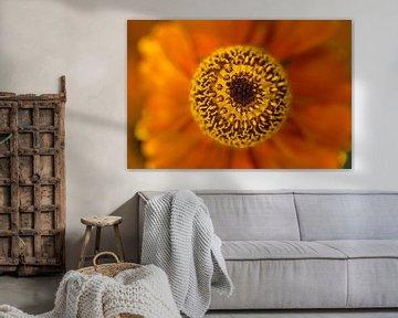 Sonnenblume (Helenium) von Connie Posthuma