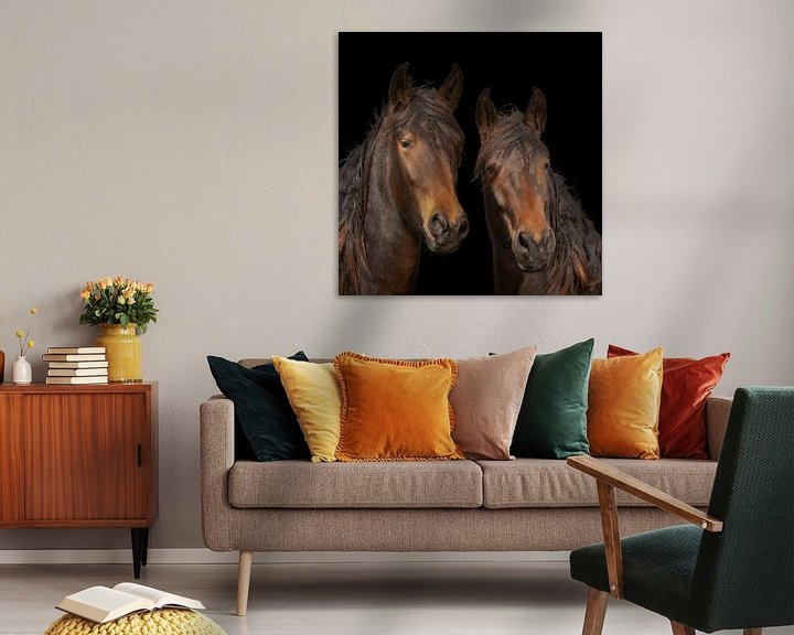 Sfeerimpressie: KWPN paarden, warmbloed paarden van Gert Hilbink