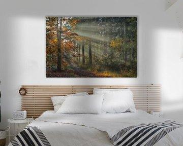Herfstbos met zonnestralen van Jacqueline Gerhardt