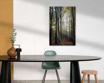 Zonnestralen bos, Lage Vuursche! van Peter Haastrecht, van
