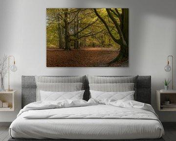 Bos in herfst-kleuren van Toon van den Einde