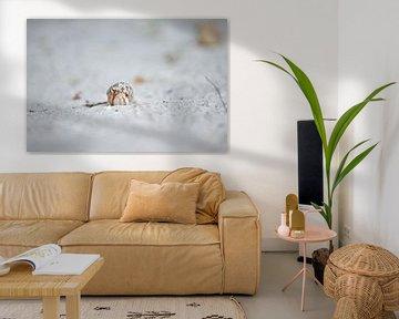Einsame Krabbe von Patrick Aniszewski