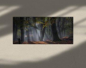 Bos van de dansende bomen van René van Leeuwen